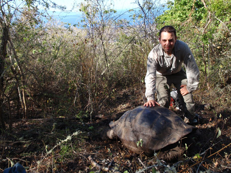 Researcher Michael Russello with a tortoise that is a hybrid of a tortoise species native to Floreana Island (Chelonoidis elephantopus) some 320 kilometres away from its habitat on Isabela Island, and thought to be extinct.