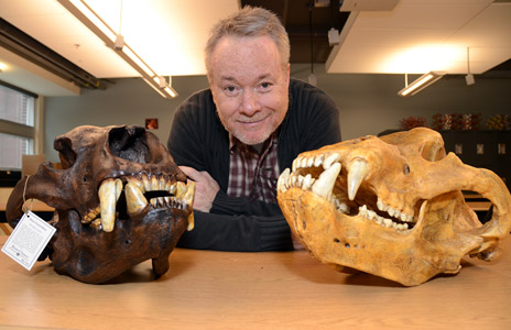 Robert Young, associate professor of earth and environmental science and physical geography poses next to a pair of replica bear skulls that he recently acquired to be used in his ice age environmental class at the University of British Columbia's Okanagan campus. The skull on the left is a replica of a Giant Short-Faced Bear which grew to 1,400 to 1,700 pounds and roamed from California to Alaska thousands of years ago. The skull on the right is of a Cave Bear which roamed Europe thousands of years ago.