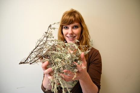 Christina Turi is investigating the potential medicinal properties of common sagebrush.