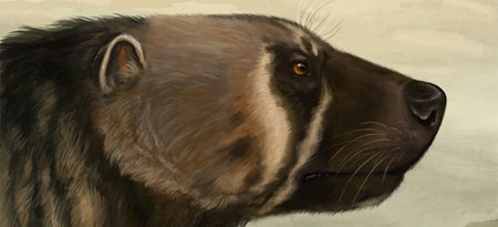UBC professor Rob Young found a bone from a five-million-year-old Plesiogulo wolverine, depicted above in an artist rendering. Image: Viergacht.
