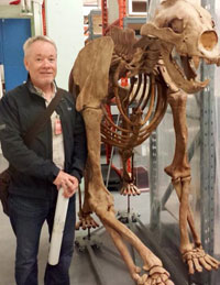 UBC Assoc. Prof. Rob Young stands beside the skeleton of a short-faced bear, an extinct carnivore that is known as an ice age super predator.