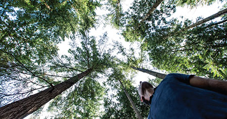 A photo of a student looking up through the trees