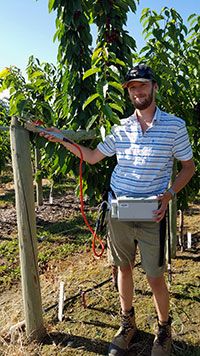 UBC student Tristan Watson conducts research on root disease in cherry orchards.