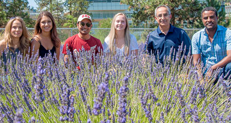 Associate professor Soheil Mahmoud (second from right) with his research team at UBC Okanagan's lavender field.