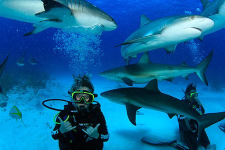 Zoology grad Ashley Kerik has ambitions of study freshwater sharks.