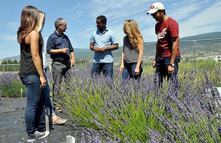 UBC Okanagan Associate Professor Soheil Mahmoud, third from left, teaches students in a small lavender field on the Okanagan campus.