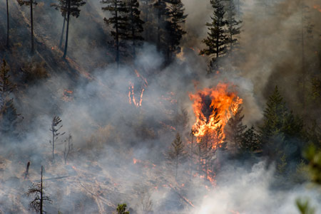 Photo of a forest fire from 2017